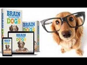 brain training for dogs by Adrienne