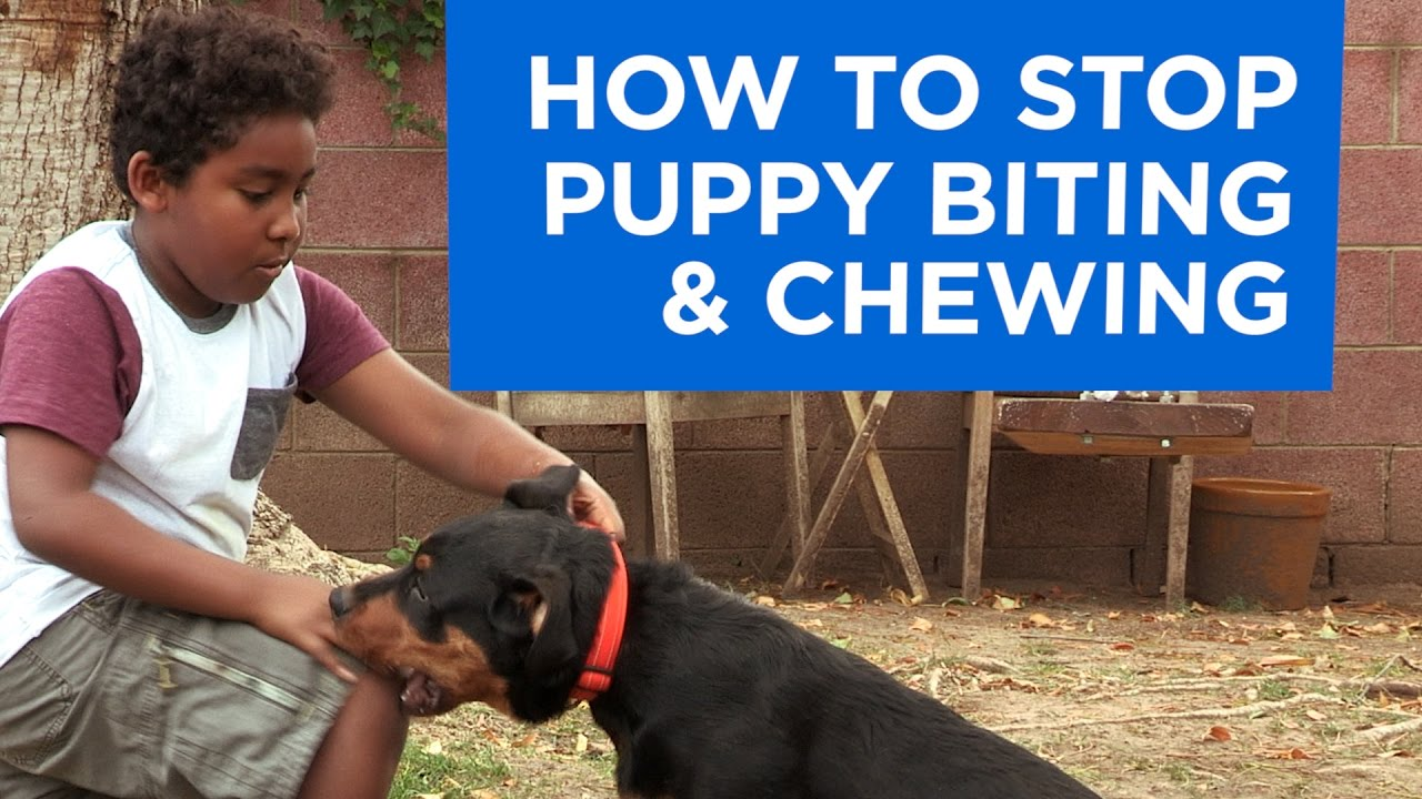 Stop A Puppy From Biting